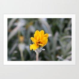 Yellow Flower Close-Up Photo Art Print