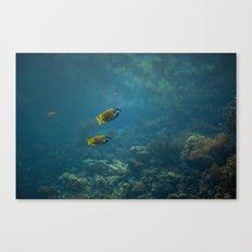 Foxface rabbitfish Canvas Print