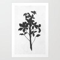 Umbrella Plant Art Print