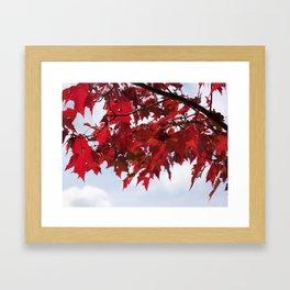 Focusing on Fall: 3 Framed Art Print