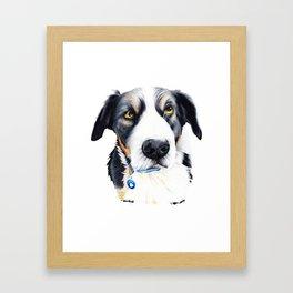 Kelpie Dog Framed Art Print