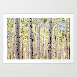 Dreamy Aspen Grove Art Print