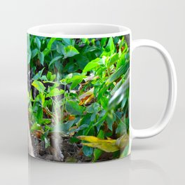 Feral Cat Coffee Mug