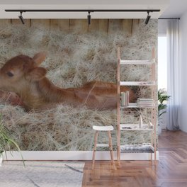 Cute baby cow Wall Mural