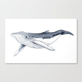 Baby humpback whale (Megaptera novaeangliae) Canvas Print
