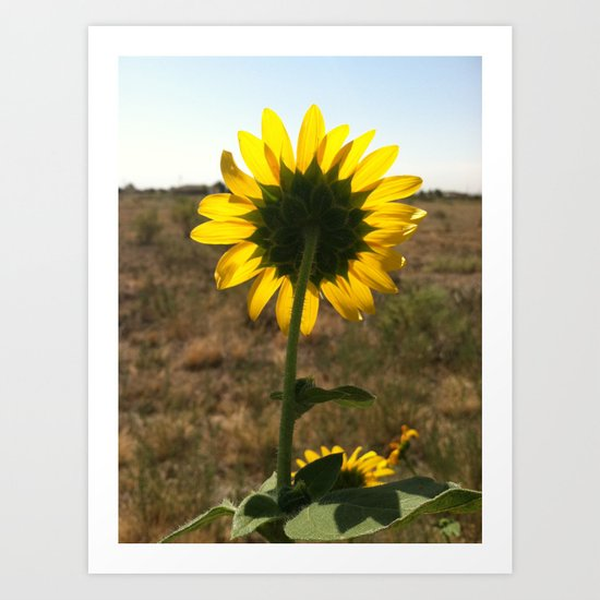 Light through the Sunflower Art Print