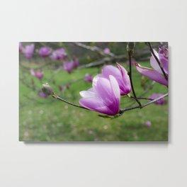 Tulip Flower on Tree Metal Print