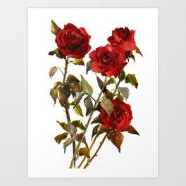 Burgundy Red Roses, deep red floral olive green dark red design roses from garden Art Print