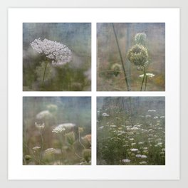 Queen Anne's Lace Botanical Series 1-4 Collage Art Print