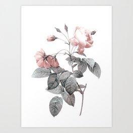 Rose 2 Kunstdrucke