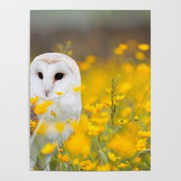 Little Owlet in Flowers (Color) Poster