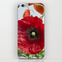 poppy iPhone & iPod Skins featuring Poppy by Maria Heyens