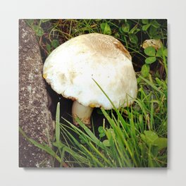 Fairy Toad Stool Metal Print