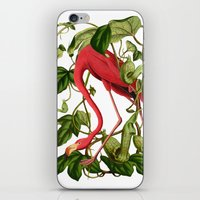 flamingo iPhone & iPod Skins featuring Flamingo by Fifikoussout