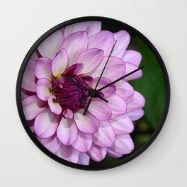 Single purple dahlia Wall Clock