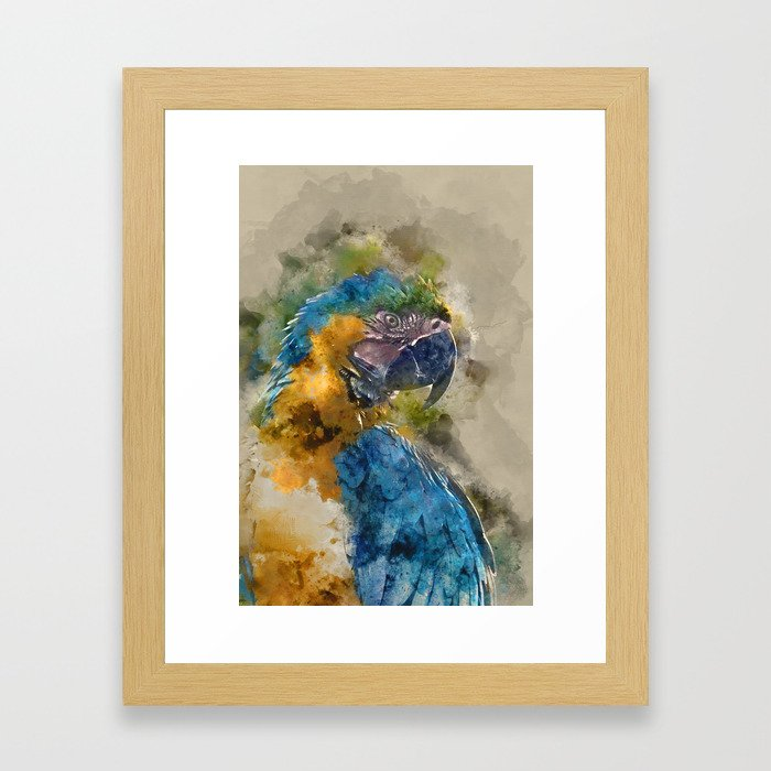 Parrot Colours Framed Art Print