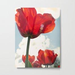 Flower Photography, Deep Ruby Red Art Print, Autumn, Home Decor Nursery Decor  Nature 8x10 Metal Print