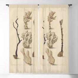 Naturalist Coral Blackout Curtain