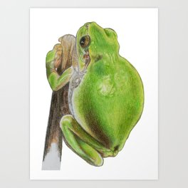 Plump Green Tree Frog Art Print