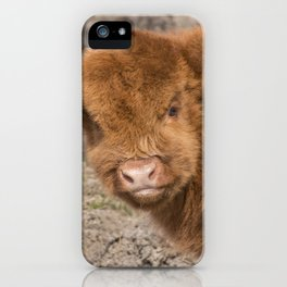 Baby Scottish Highland Coo iPhone Case