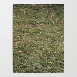 raked Poster