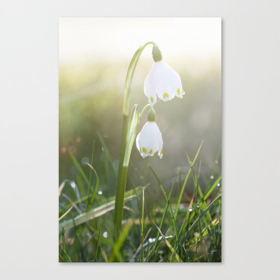 Shining - spring snowflake in sunlight - Flowers on #Society6 Canvas Print