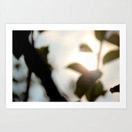 morning shade Art Print
