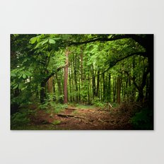 Glade of my Dreams  Canvas Print