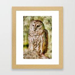Barred Owl on Moss Framed Art Print