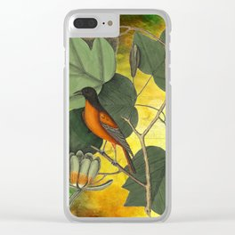 Baltimore Oriole on Tulip Tree, Vintage Natural History and Botanical Clear iPhone Case