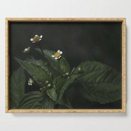 Botanical Still Life Chamomile Serving Tray