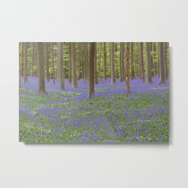 Bluebell Forest 3 Metal Print