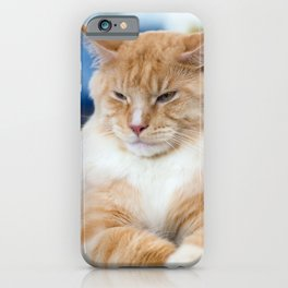 Red-white tabby Maine Coon cat iPhone Case