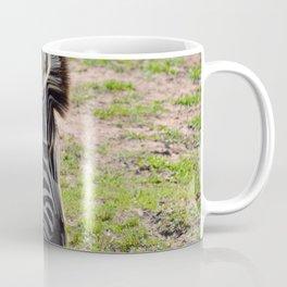 Zebra Eating Grass Coffee Mug