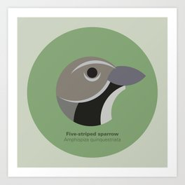 Five-striped sparrow Art Print