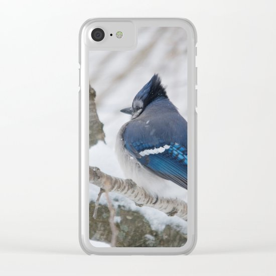 Winter's Cold (American Blue Jay) Clear iPhone Case