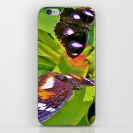 Butterflies Chatting iPhone Skin