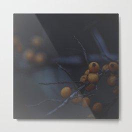 Fruits of Autumn 6 Metal Print