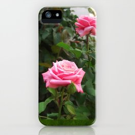 Pink Roses in Anzures 5  Blank P1F0 iPhone Case