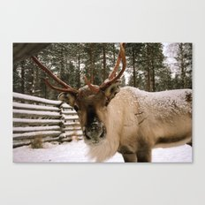 Adorable In The Arctic Canvas Print