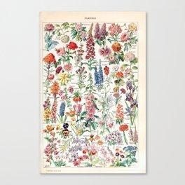 Adolphe Millot - Fleurs pour tous - French vintage poster Canvas Print