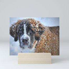 Saint Bernard In The Snow Mini Art Print