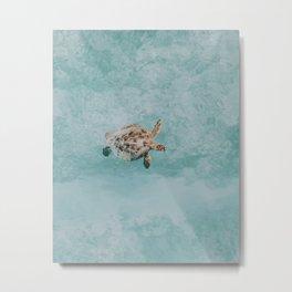 sea turtle vi Metal Print