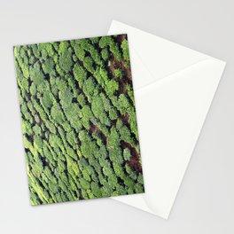 Tea trees, Munnar Tea Plantation, Kerala, India Stationery Cards