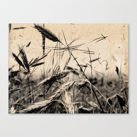 DRESSED GRAIN Canvas Print