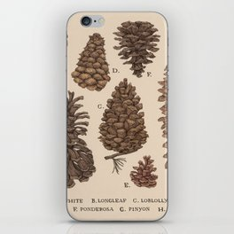Pinecones iPhone Skin