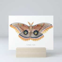 Polyphemus Moth Mini Art Print