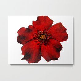 Red Winter Rose Transparent Metal Print
