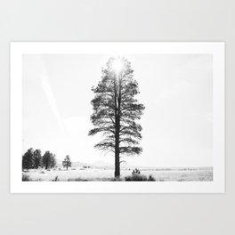 Black and White Pine Art Print