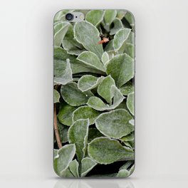 Green. iPhone Skin